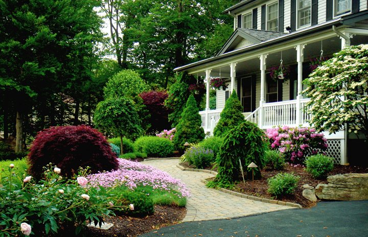 Carefully Chosen Plants, Trees, And Shrubs