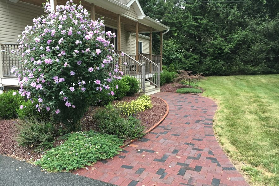Brick Walkway with Rose of Sharon