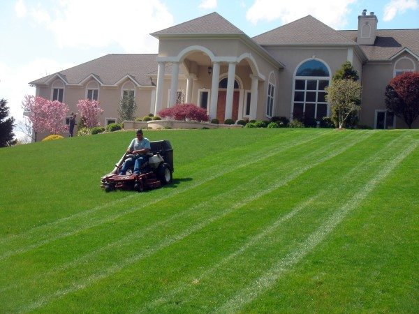 Lawn Maintenance - Mowing