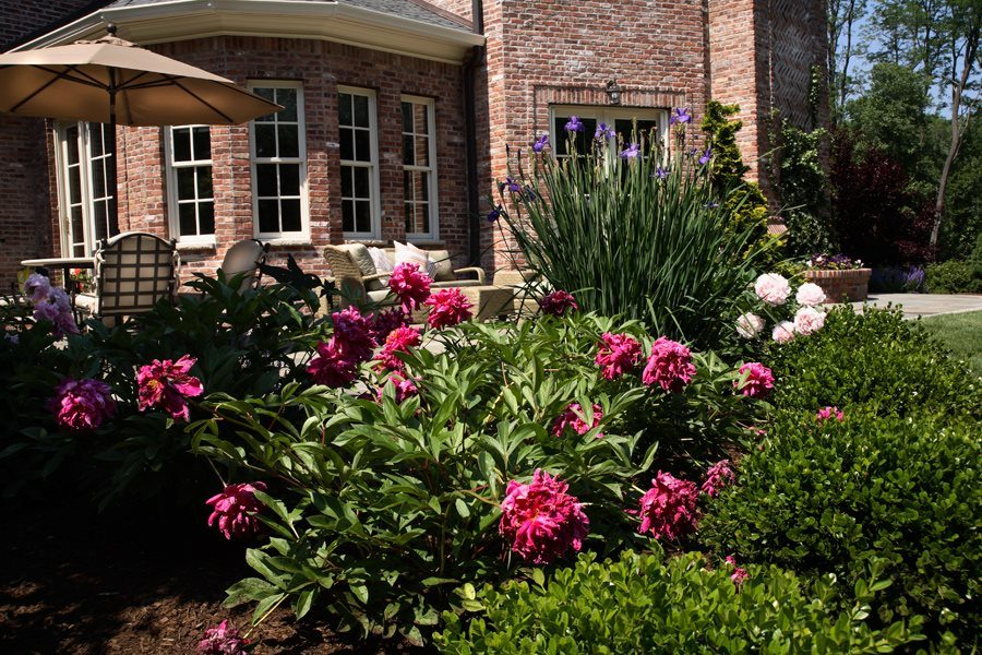 Garden Maintenance - Peonies and Roses